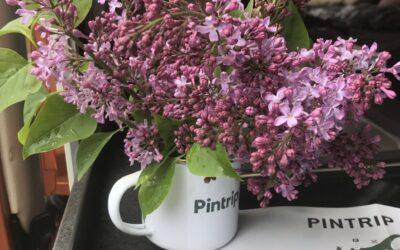 Bewerten Sie einen Pintrip-Host und gewinnen Sie 2 wunderschöne Emaille-Tassen mit dem Pintrip-Logo