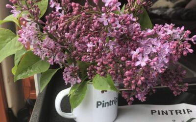 Anmeld en Pintrip-vært og vind 2 flotte emaljekrus med Pintrip-logo